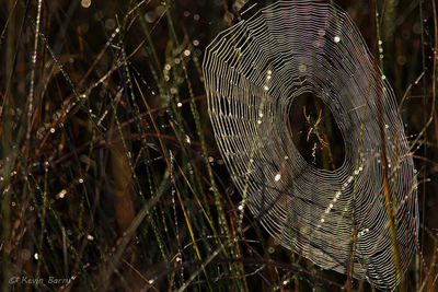 Spiderweb at Sunrise
