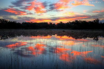 Allen David Broussard Catfish Creek Preserve, Florida, pond at dawn