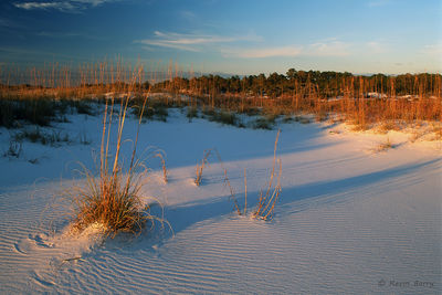 Sea Oats at Sunset, Gulf Islands National Seashore, Florida, Uniola paniculata