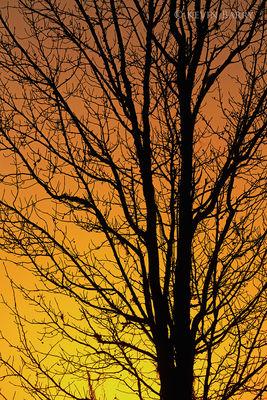 Tree at sunrise, Allen David Broussard Catfish Creek Preserve, Polk County, Florida