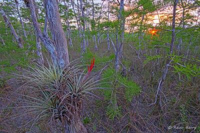 sunset, Big Cypress National Preserve, Florida
