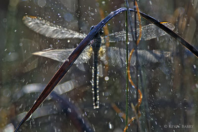Dragonfly shaking off morning dew