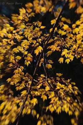 Autumn color, O'Leno State Park, High Springs, Florida