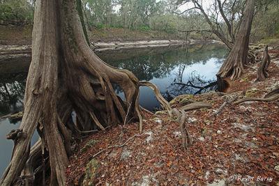 Suwannee River 3