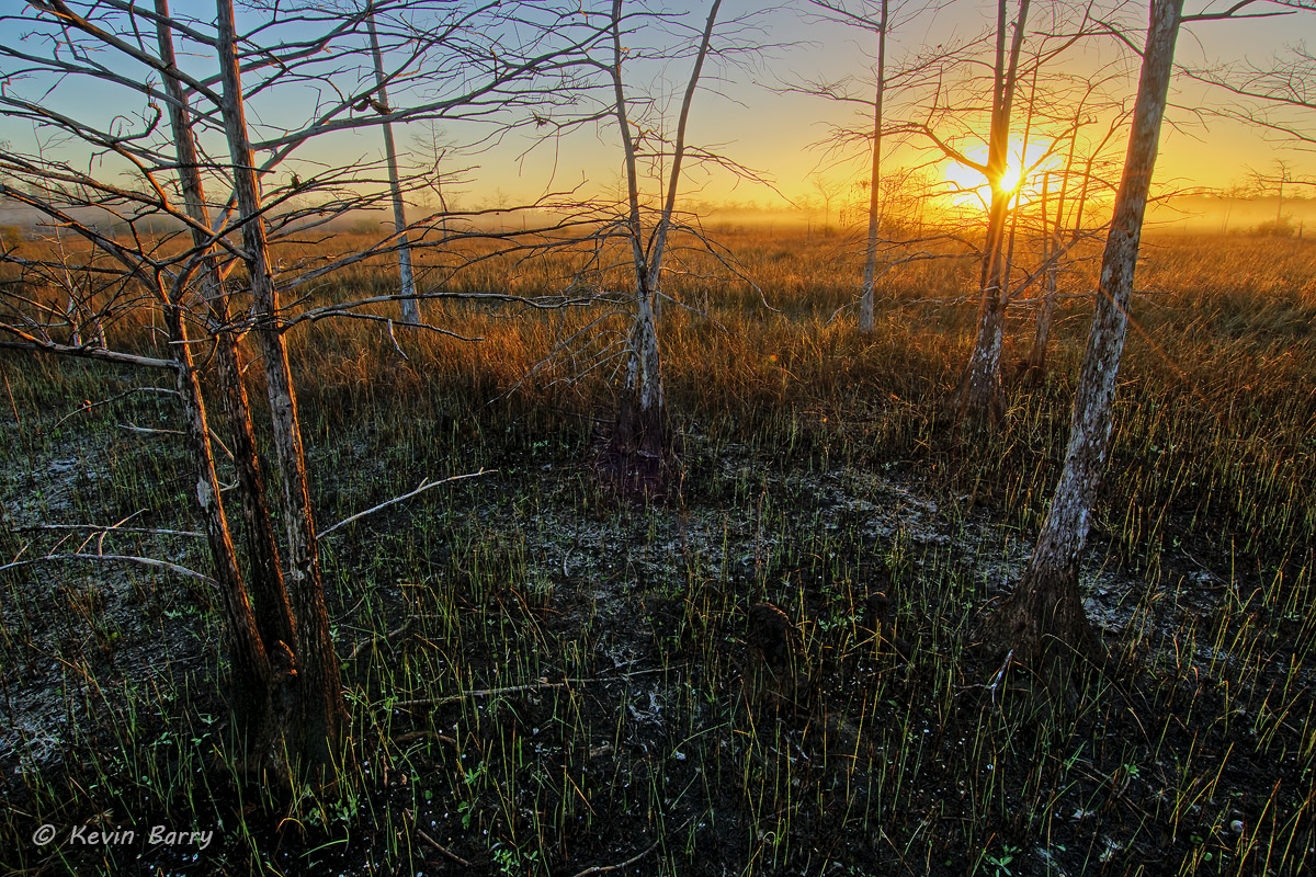 Big Cypress Sunrise, Big Cypress National Preserve, Florida