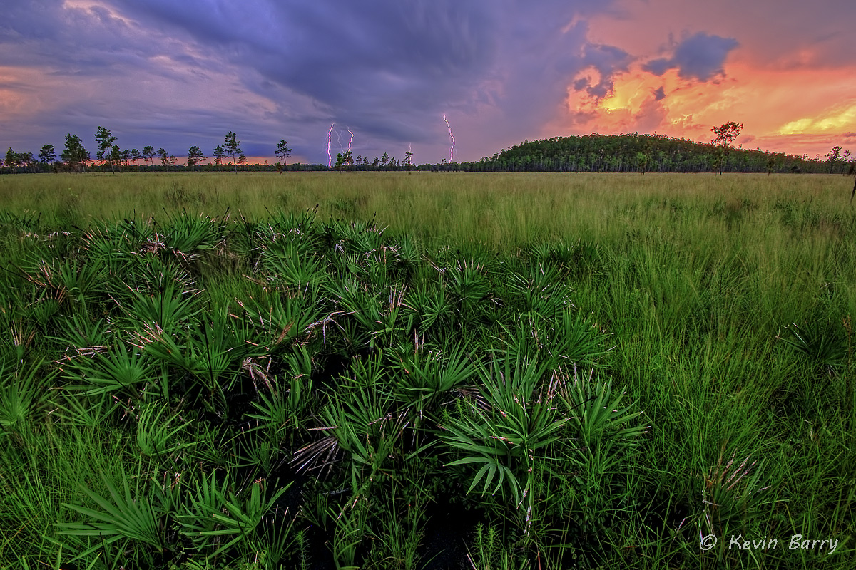 Four Strikes and You're Out, Osceola County, Florida, nature, natural, lightning, sunset, cypress dome, saw palmetto, grasses...