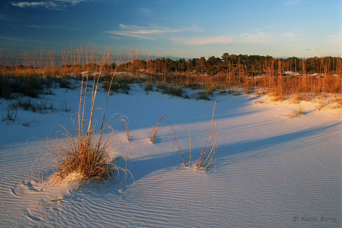 Sea Oats at Sunset, Gulf Islands National Seashore, Florida, Uniola paniculata