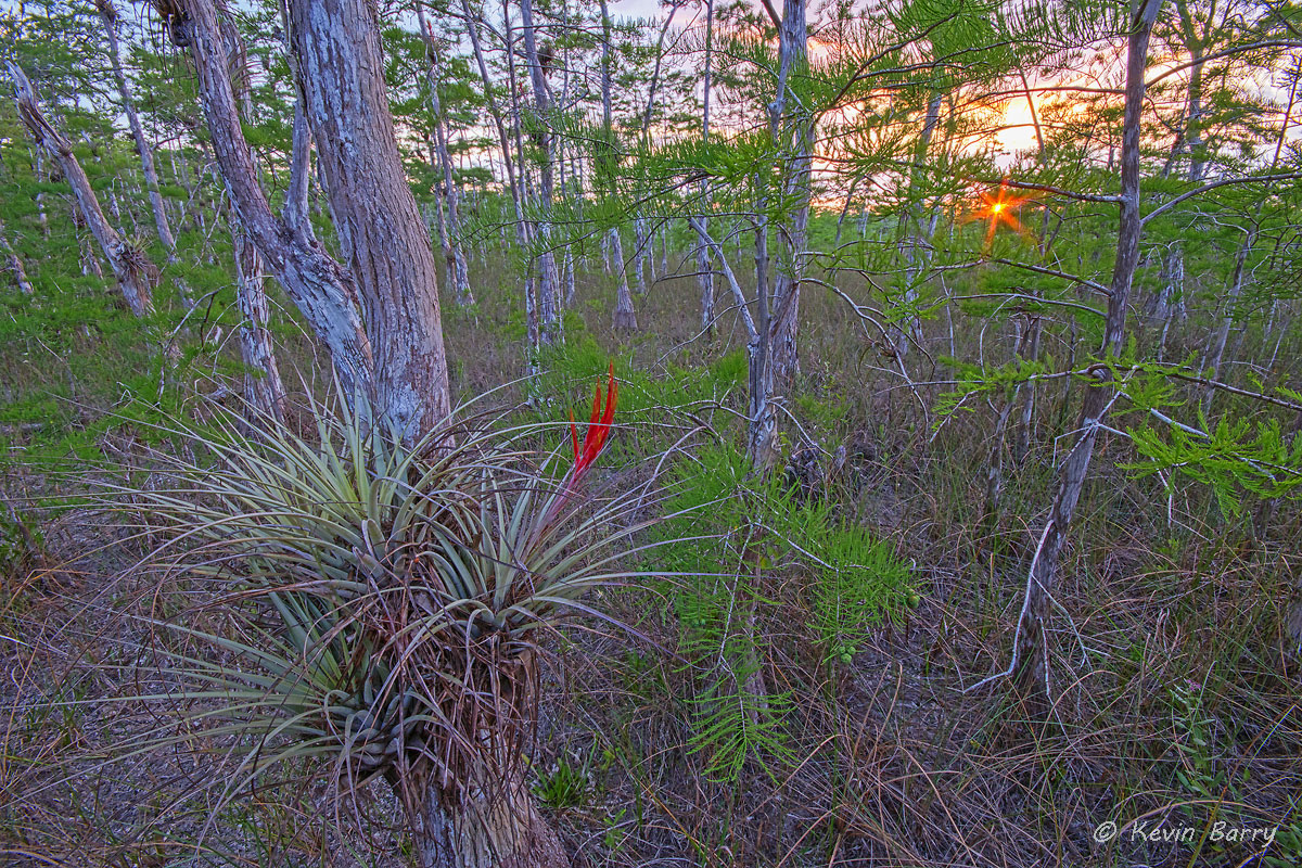 sunset, Big Cypress National Preserve, Florida, photo