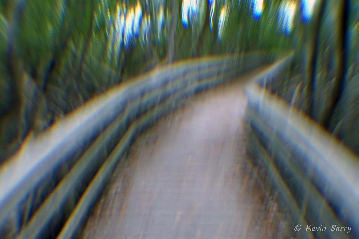 Boardwalk through mangroves, Everglades National Park, Florida, nature photography, blur, artistic, horizontal, day, exterior...