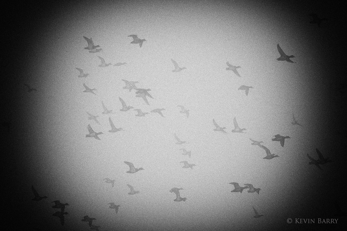 An early morning blastoff of ducks at central Florida's Circle B Bar Reserve.
