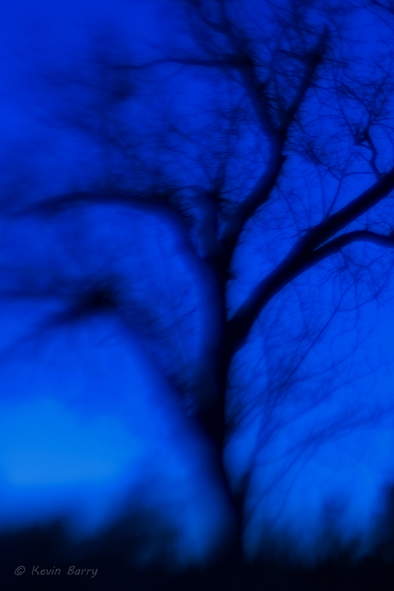 Feeling Blue, Balcones Canyonlands National Wildlife Refuge, Texas, abstract, blur, tree, lone, one, nature, native, Hill Country...