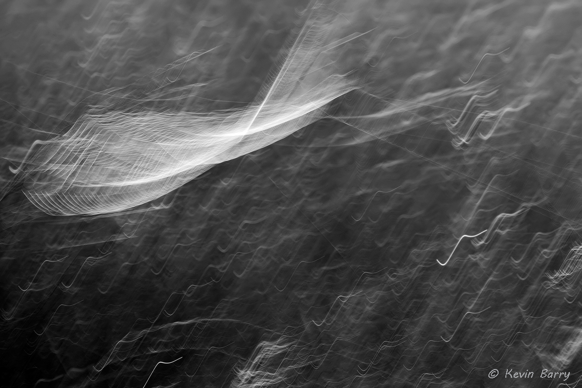 Blowin' in the Wind, Big Cypress National Preserve, Florida, abstract, monochrome, bw, black and white, horizontal, day, exterior...