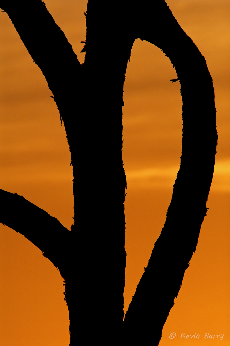 A twist of fate, Jonathan Dickinson State Park, Jupiter, Florida, tree, abstract, orange, sunset, graphic, vertical, nature...