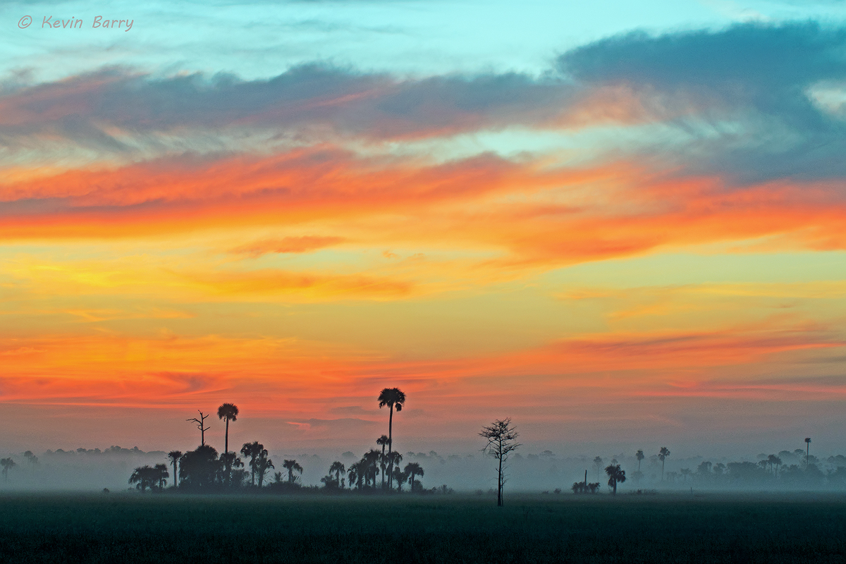 Big Cypress National Preserve at dawn, Florida, photo