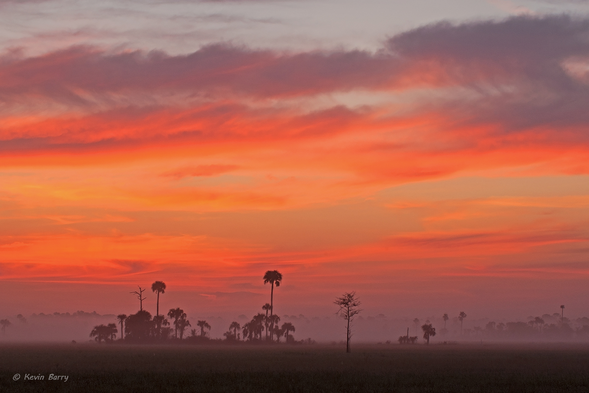 Big Cypress National Preserve, Florida, photo