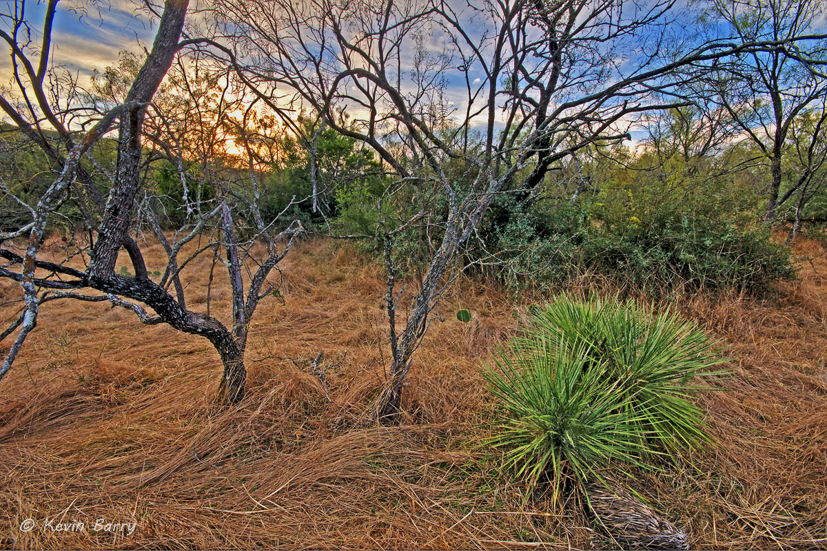 Sunrise from Walter Buck Wildlife Management Area, Kimble County, Texas, sunrise, landscape, scenic, grasses, dry, yucca, trees...