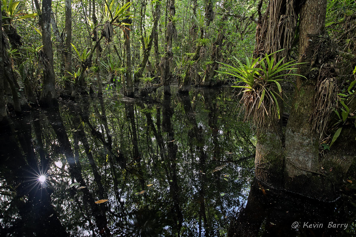 Fakahatchee Strand Preserve State Park, Collier County, Florida, photo