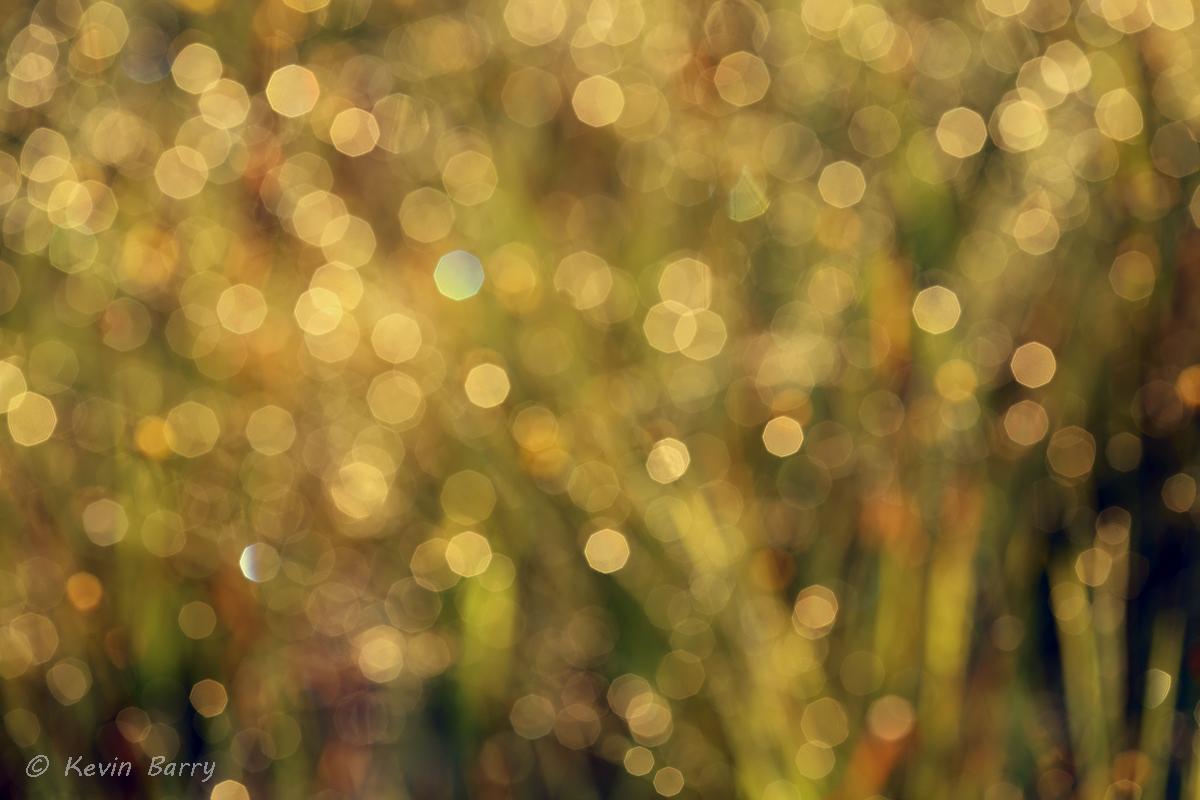 grasses abstract, Allen David Broussard Catfish Creek Preserve State Park, Polk County, Florida, nature photography, horizontal...