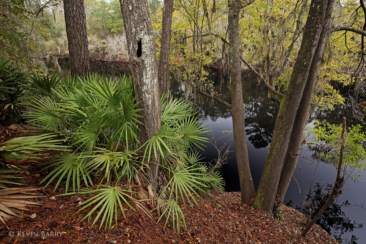 Big Shoals State Park, White Springs, Florida, Suwannee River, photo