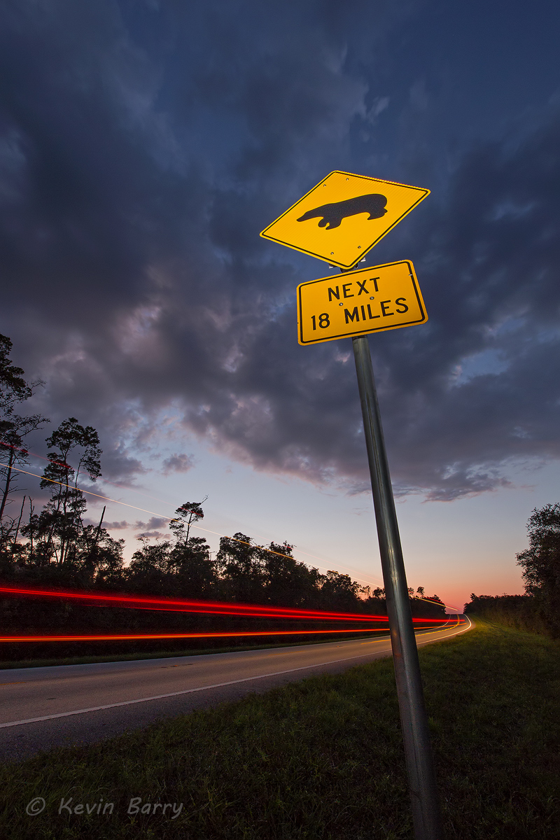 bear crossing sign, Ocala National Forest, Florida, photo