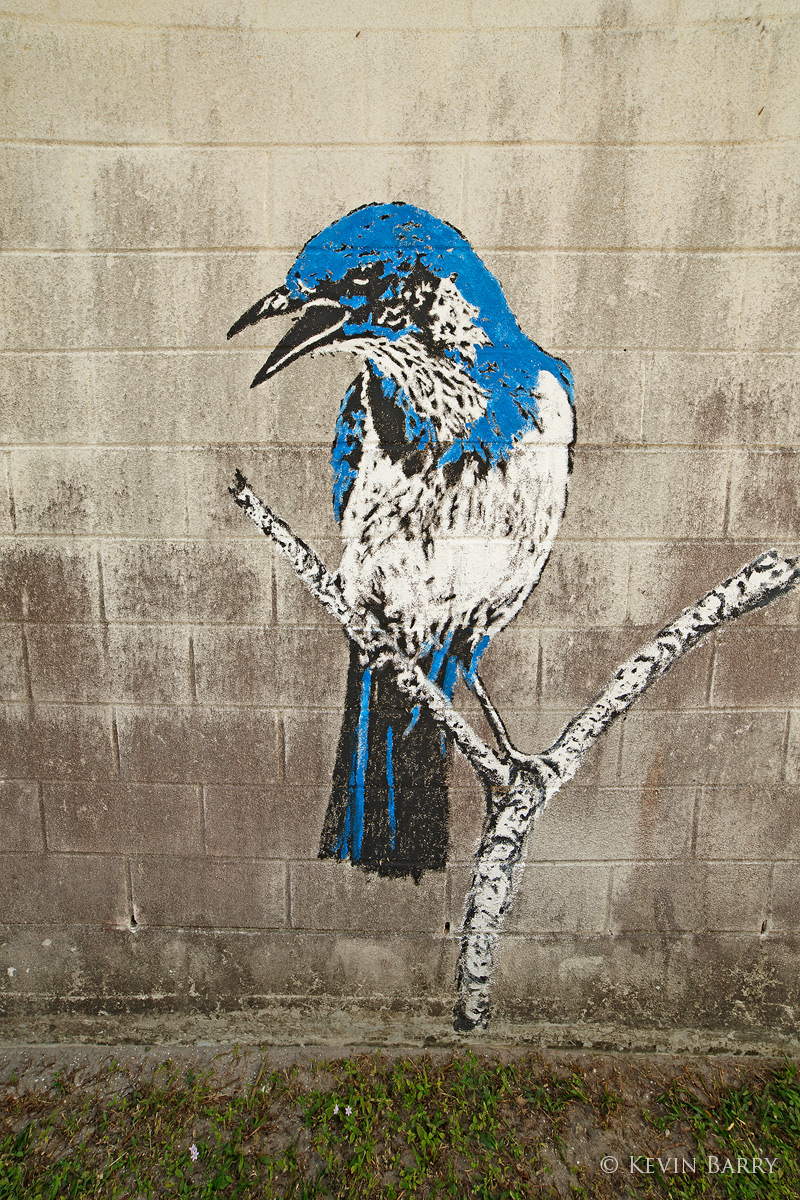 Florida Scrub Jay Mural, Martin County, Florida, photo