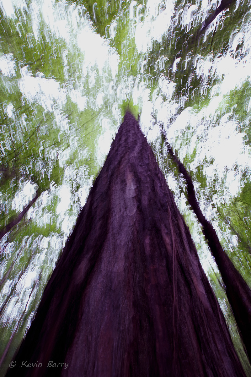 Things are looking up, Angus Gholson Nature Park, Chattahoochee, Florida, vertical, abstract, blur, tree, nature, natural, native...