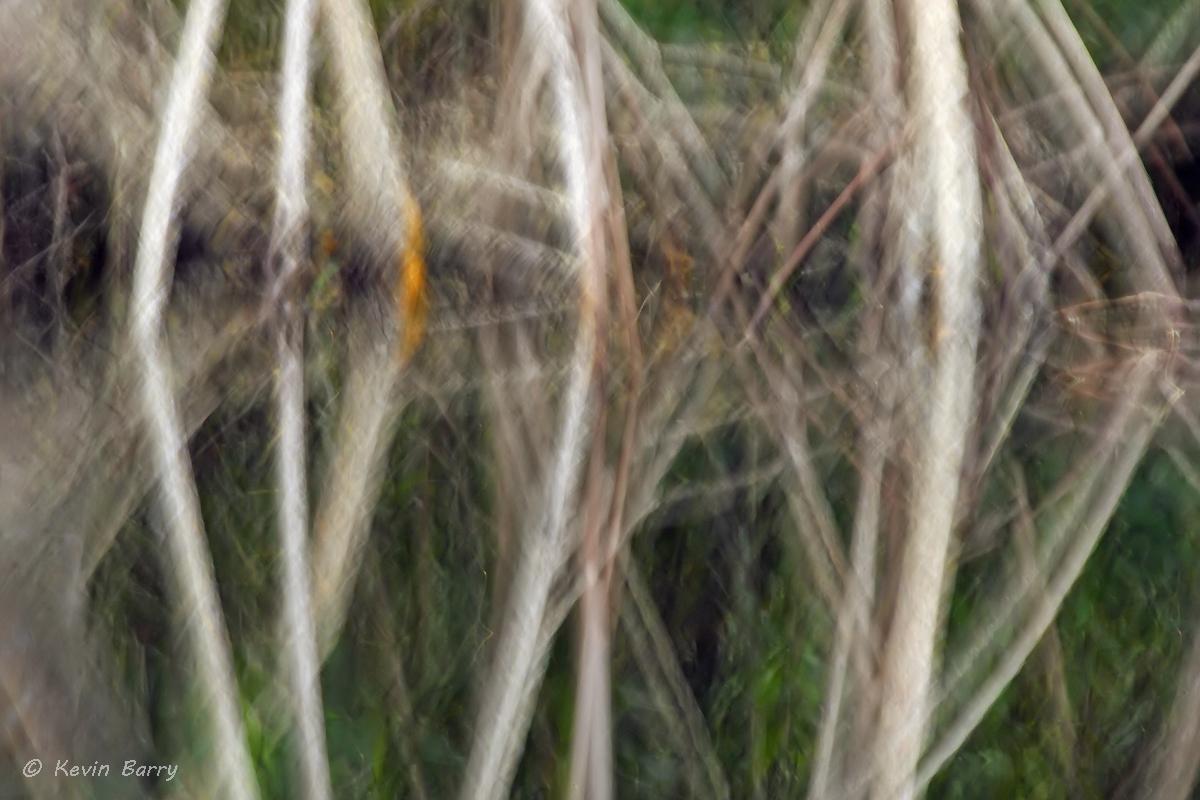 Mangroves, Dade County, Florida, abstract, horizontal, USA, America, south, southern, close-up, reflection, morning, nature...
